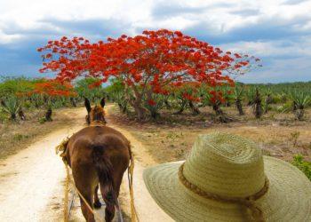 Hacienda Sotuta de Peon, Merida, Yucatam au Mexique, cheval, balade en calèche