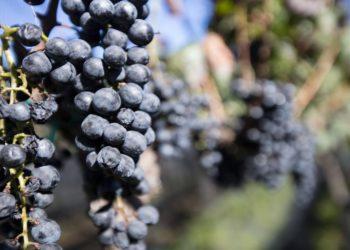 Vignobles du Mexique, circuit sur-mesure, raisins, vins, gastronomie, expérience culinaire, Mexique