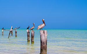 Un circuit en famille à la découverte de Mexico et du Yucatan