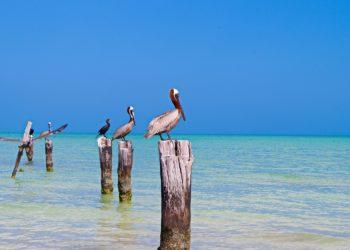 Oiseaux sur l'ile d'Holbox, Yucatan, Mexique