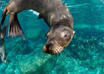 Lion de mer en Basse Californie, La Paz, Aventure en Baja, Mexique