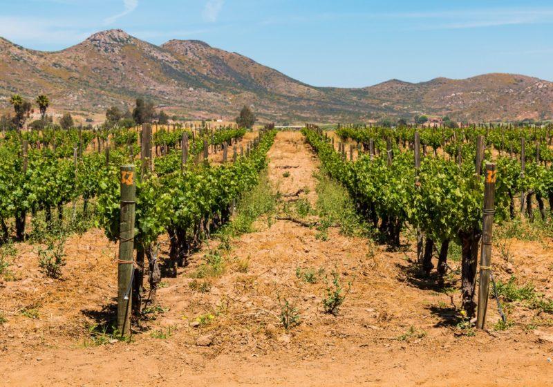 Les vignobles du Mexique