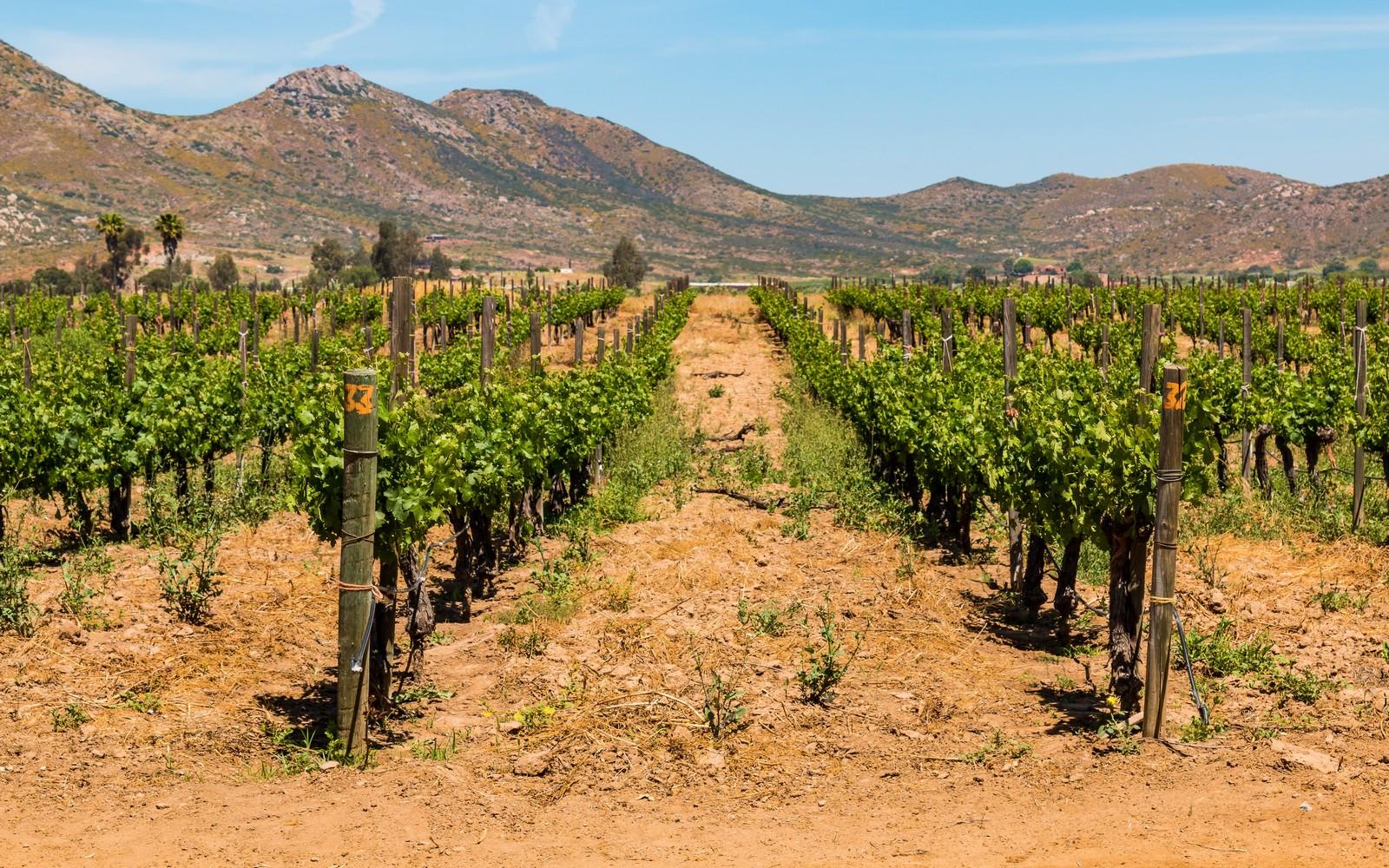 Voyage Les vignobles du Mexique au Mexique